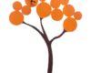 ceasuri de perete portocalia