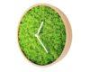 Evergreen muschi verzi