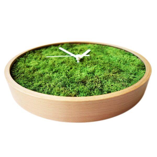 Evergreen ceas licheni vedere aproape